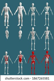 12 detailed renders in 1, mans body with skeleton and organs - anatomical colored examination concept - creative medical 3D illustration isolated on blue