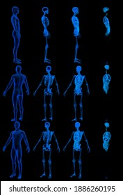 12 x-ray renders of male body with skeleton and internal organs - anatomical concept for education - digital hi-res medical 3D illustration isolated