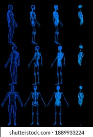12 x-ray renders of male body with skeleton and internal organs - roentgen concept for medicine - cg detailed medical 3D illustration isolated