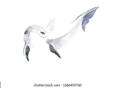 123456123455555 Playful Dolphin under water bottlenose dolphin
