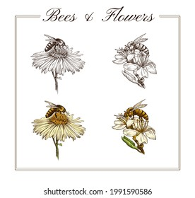 2D digital illustration. Bees and flowers in hand-drawn style.