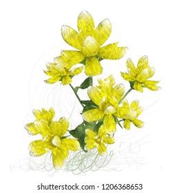2d illustration. Decorative isolated flower image. Floral Illustration. Vintage botanic artwork. Hand made drawing.