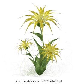 2d illustration. Decorative isolated flower image. Floral Illustration. Vintage botanic artwork. Hand made drawing. Classic botany drawing style.