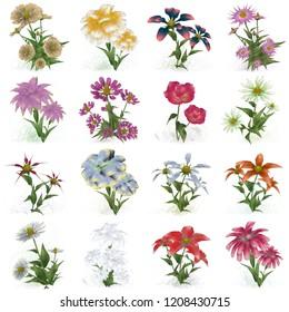 2d illustration. Decorative isolated flower image. Floral Illustration. Vintage botanic artwork. Hand made drawing. Vintage style. Flower set.