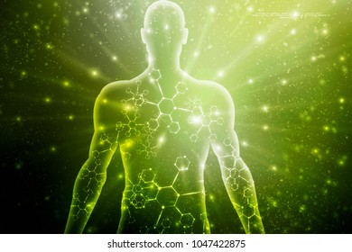 2d illustration Human Male Muscle Body