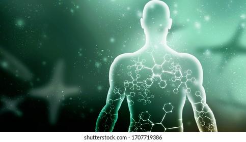 2. Illustration Muskelgewebe bei Männern