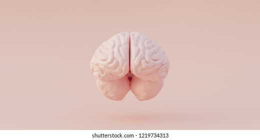 3 d illustration. Human anatomy. Realistic three-dimensional model of the human brain model isolated on a light background. Left and right hemisphere of the brain. Render. front view