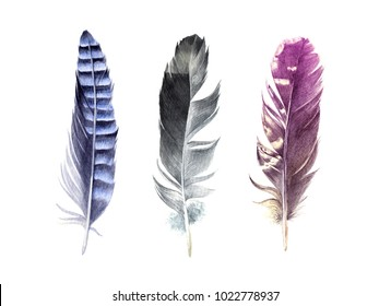 3 hand drawn watercolor feather isolated on white background