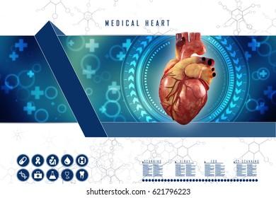 3 D Anatomy Human Heart Stock Illustration 621793865