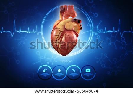 3 D Anatomy Human Heart Stock Illustration 566048074 - Shutterstock