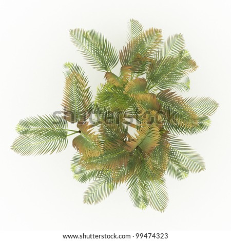 3d  areca palm isolated over white