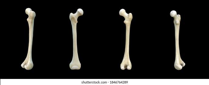 3D artwork, Bones Anatomy View, femur,Human skeleton, black background, rendering