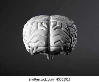 3D brain front view