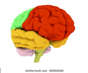 3d brain illustration and colored areas