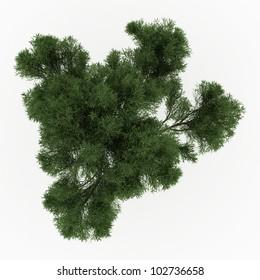 White Willow Bark Stock Illustrations, Images & Vectors   Shutterstock
