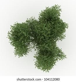 Willow Tree Images, Stock Photos & Vectors   Shutterstock