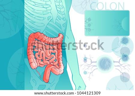 3 D Diagram Illustration Human Colon Internal Stock Illustration