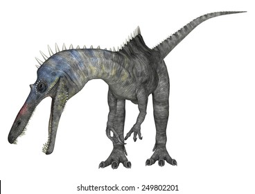 3D digital render of a curious dinosaur Suchomimus or Suchomimus tenerensis isolated on white background