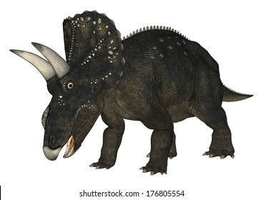 3D digital render of a dinosaur Diceratops isolated on white background