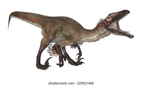 Utahraptor Imagenes Fotos De Stock Y Vectores Shutterstock Intelligence utahraptor was a dromaeosaurid, whose intelligence (as measured by its relative brain to body weight, or eq) was the highest among the dinosaurs. https www shutterstock com es image illustration 3d digital render dinosaur utahraptor isolated 329017460