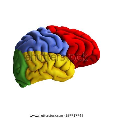 3 d digital render human brain diagram stock illustration 1599179633d digital render of a human brain diagram isolated on white background