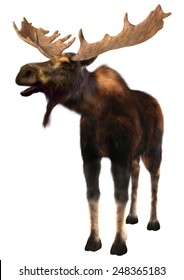 3D digital render of a  moose (North America) or Eurasian elk (Europe), or Alces alces, isolated on white background