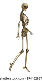 3D digital render of an old walking human skeleton isolated on white background