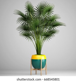 3D digital render of palm isolated on white background