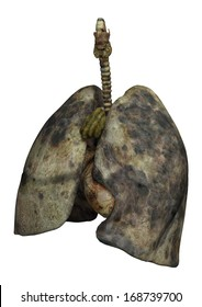 3D digital render of rotten lungs of female smokers isolated on white background