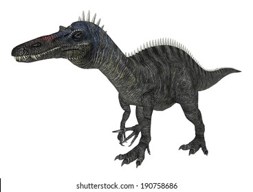 3D digital render of a walking dinosaur Suchomimus isolated on white background