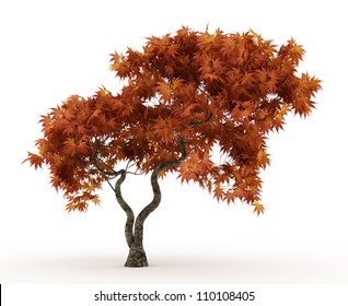 3d Downy Japanese Maple tree in autumn isolated over white