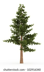 3d eastern white pine tree isolated over white