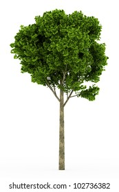 3d Ginkgo tree isolated over white
