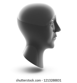 3D head in white background. 3D Iluustration.