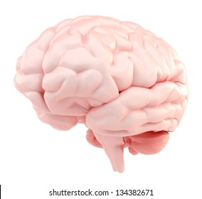 3d human brain - organic version