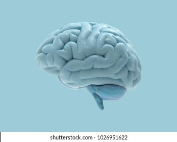 3D human brain rendering in side view isolated on pastel blue background with clipping mask for use in any background
