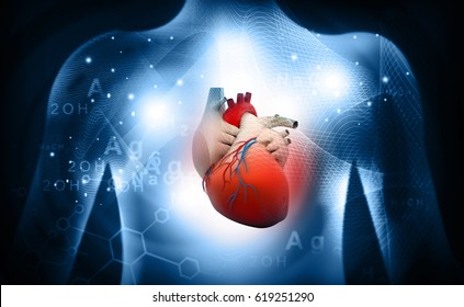 3d human heart  medical anatomy