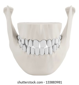 3d human jaw bone closed with teeth on white background