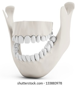 3d human jaw bone opened  with teeth on white background