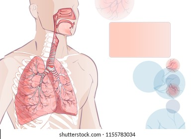 3d of the human Respiratory System (Lungs Inside) larynx nasal throttle anatomy. Man body parts. Hand drown sketch illustration