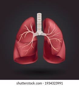 3D Human respiratory system, lungs graphic