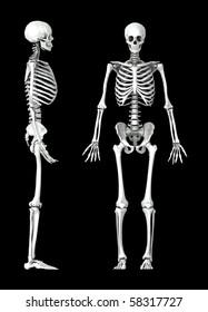 3D human skeleton medical illustration