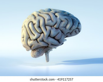 3D illustrated detailed view of the human brain. Right view.