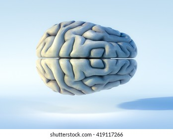 3D illustrated detailed view of the human brain. Top view.