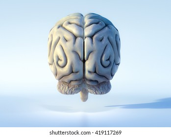 3D illustrated detailed view of the human brain. Back view.