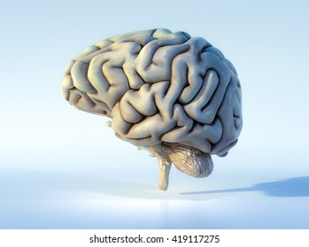 3D illustrated detailed view of the human brain. Left view.