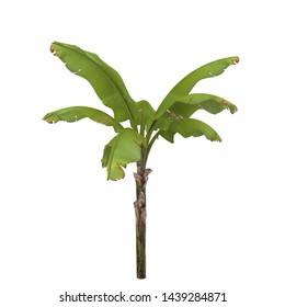 3D Illustration about plant of banana
