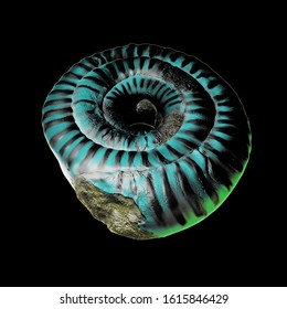 3d illustration of Ammonite fossil