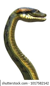 3d Illustration Anaconda, Boa Constrictor The World's Biggest Venomous Snake Isolated on White Background, 3d Rendering