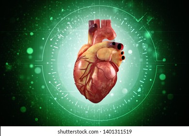 3d illustration  Anatomy of Human Heart